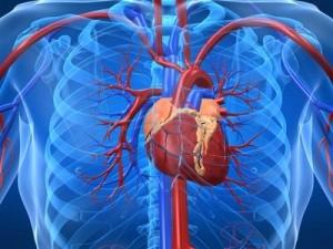 enfermedad- coronaria-ingenieria-hospitalaria-corazon